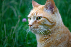 Animal life. Portrait of a cat on a summer day royalty free stock image