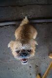Animal lindo Foto de archivo libre de regalías