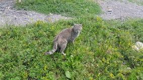 Animal lindo casero, poco gatito gris en la hierba metrajes