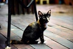Animal lindo del animal doméstico Fotografía de archivo libre de regalías