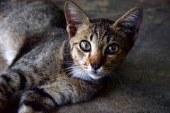 Animal lindo del animal doméstico Fotos de archivo