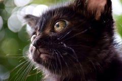 animal lindo del gatito Imagen de archivo