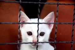 animal lindo del gatito Foto de archivo