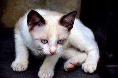 animal lindo del gatito Fotografía de archivo libre de regalías