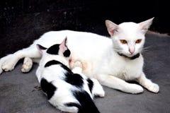 animal lindo del gatito Foto de archivo libre de regalías