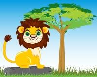 Animal lion in savannah Stock Photos
