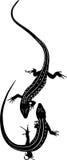 Animal lizard. Vector isolated on white background vector illustration