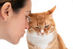 Animal love. Beautiful ginger cat close up cuddling with a woman Stock Photos