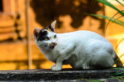Animal of love Royalty Free Stock Images