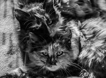 Love the cats. Very interesting photo closeup of two cats sleeps together. The cats is taking care about each other. Black and white gives to the photo special Stock Photo