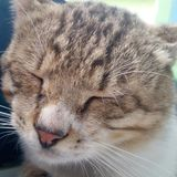 Cat close up stock photo
