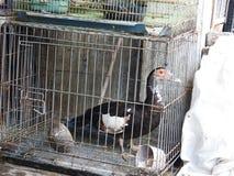 Animal market in Bali Indonesia Stock Image