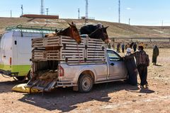 Animal market in Morocco. Local animal market place in Morocco, Africa. Farmers selling mules Stock Image