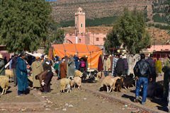 Animal market in Morocco village. Local animal market place in Morocco, Africa. Farmer selling sheep Royalty Free Stock Image