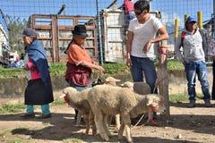 Animal market in Otavalo, Ecuador Stock Image