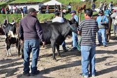 Animal market in Otavalo, Ecuador Stock Photos