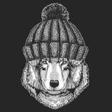 Animal mignon portant l'image dessinée par Wolf Dog Hand tricotée de chapeau d'hiver pour le tatouage, emblème, insigne, logo, co Photos libres de droits
