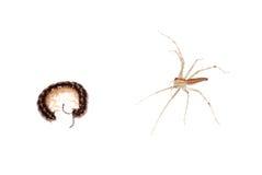 Animal millipede Stock Photo