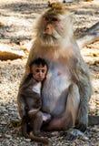 Animal Monkey Stock Photo