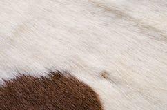 Animal nature fur Royalty Free Stock Photo