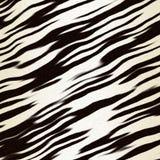 Animal noir et blanc de piste Photographie stock libre de droits