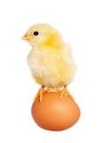 Animal oriental de bébé mignon Photos libres de droits
