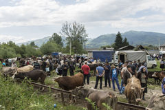 The animal outdoor market in Romania Stock Photography