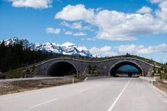 Animal overpass, Banff. Animal overpass on the highway through Banff National Park. Overpass is provided to allow large and small animals to pass over the busy Royalty Free Stock Photography