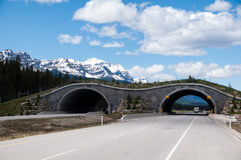 Animal overpass, Banff Royalty Free Stock Photo
