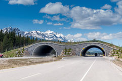 Animal overpass, Banff. Animal overpass on the highway through Banff National Park. Overpass is provided to allow large and small animals to pass over the busy Stock Photos