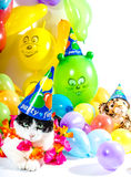 Animal Party Stock Photos