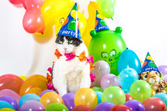 Animal Party Stock Photography