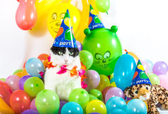 Animal Party Royalty Free Stock Image