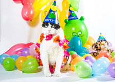 Animal Party Royalty Free Stock Photo