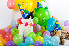 Animal Party Royalty Free Stock Images
