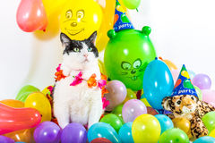 Animal Party Stock Images