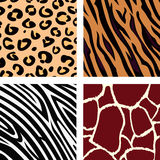 Animal Pattern - Tiger, Zebra, Giraffe, Leopard Royalty Free Stock Photos