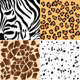 Animal patterns Stock Image