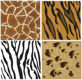 Animal patterns of tiger, leopard, giraffe and zeb Stock Photography
