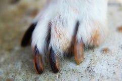 Animal paw stock image
