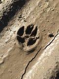 Animal paw mark in the mud Stock Photos
