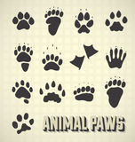 Animal Paw Prints. Collection of various animal paw prints isolated Stock Photos
