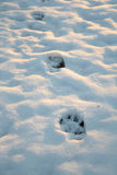 Animal paw prints Royalty Free Stock Image