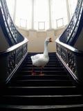 Animal perdido na cidade Foto de Stock