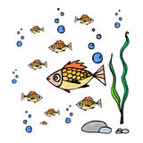 Animal-pescados del mar Imagen de archivo libre de regalías