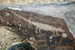 Animal Petroglyph Stock Images