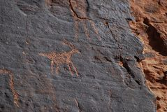 Animal petroglyphs on red sandstone. In the Valley of Fire, Nevada, USA stock image