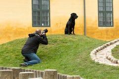 Animal photographer at work Royalty Free Stock Image