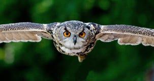 Animal, Photography, Avian Royalty Free Stock Photos