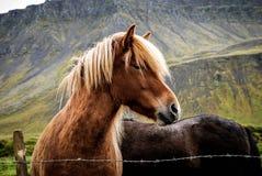Animal, Photography, Barb Stock Photo